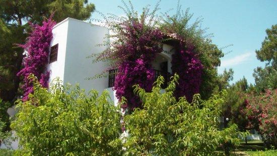 Simena Sun Club: бунгала обвивают цветниковые кустарники