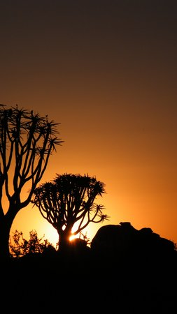 Quivertree Forest and Giant's Playground: Sunset at Quivertree Forset.