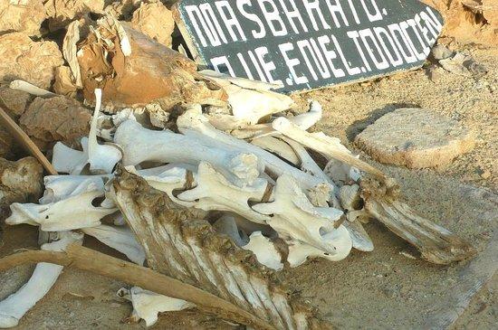 Chott El Jerid: Tozeur: Tunisia: ossa .....