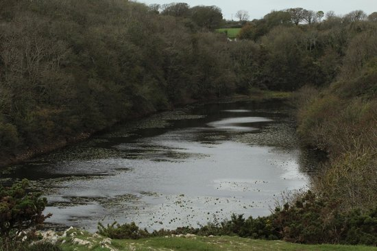 Lily Ponds: A view of the pond at Bosherton