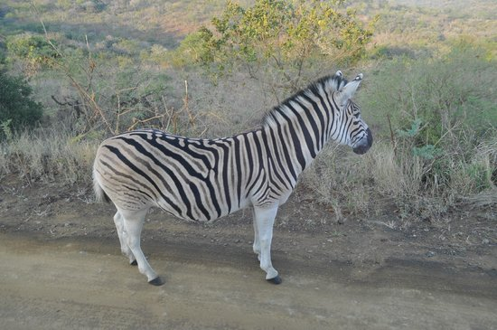 EuroZulu Guided Tours & Safaris: :-)