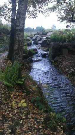 Comrie Croft Eco Hostel & Camping : stream next to pitch 5