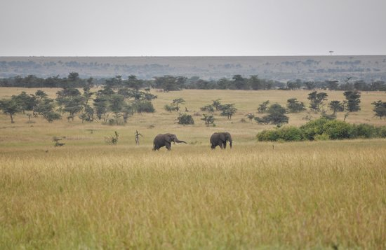 Elephant Pepper Camp: Outside Our Front Flap