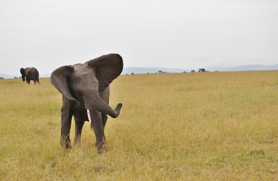 Elephant Pepper Camp: Big Sister Showing Us Whose Boss