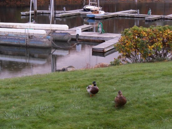 Yachtsman Lodge & Marina: The only intruders were the ducks