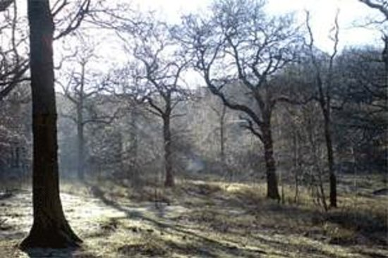 Parndon Wood Nature Reserve Harlow England Top Tips Before You Go With Photos Tripadvisor
