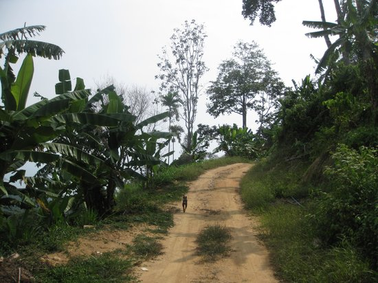 Hiking on Samui - Day Tours