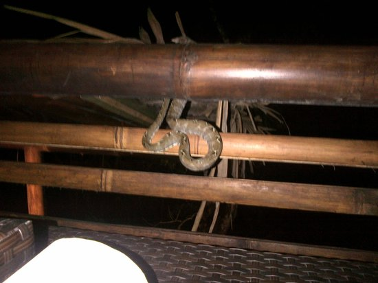 La Selva Amazon Ecolodge: Drinks before dinner with a Boa