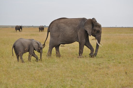 Elephant Pepper Camp : Elle & Family