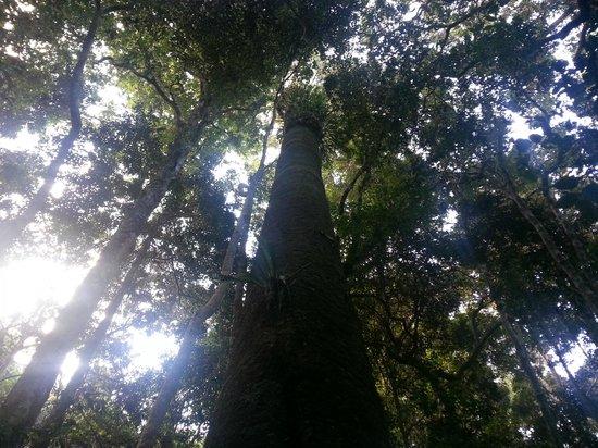 Binna Burra Mountain Lodge: forest