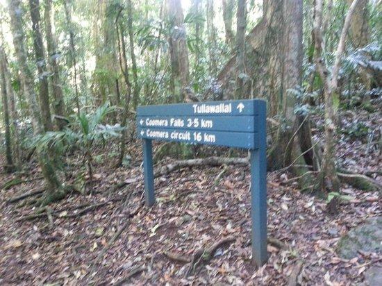 Binna Burra Mountain Lodge: Various walks