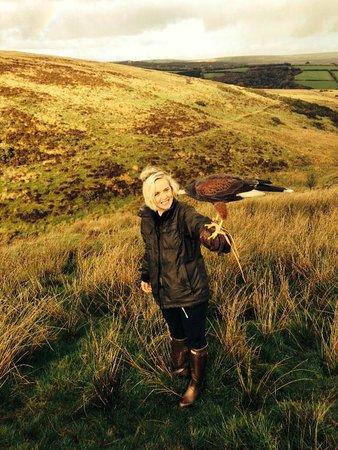North Devon Hawk Walks: Hawk Walk