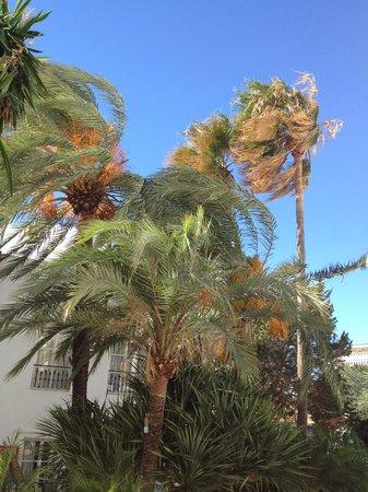 Sahara Sunset Club: Windy day... palms near balcony