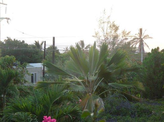 Hacienda de Palmas : View from room gallery