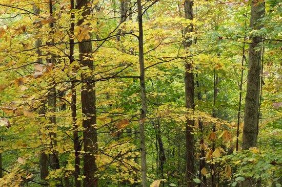 Hawks Nest State Park: fall foliage @ Hawks Nest SP, WV