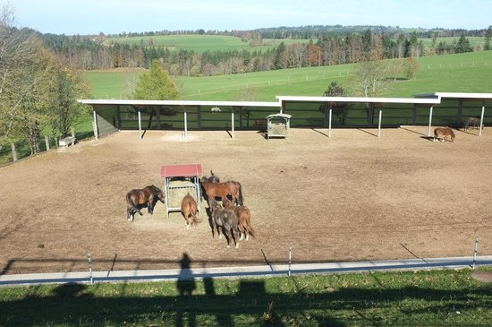 Les Breuleux, Szwajcaria: Vue sur les chevaux