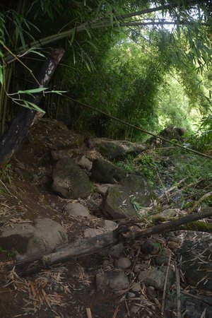 Maui, HI: Bamboo Forrest (between MM 6 and 7)