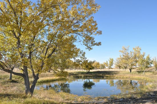 Deer Trail, CO: Pond at Richmil Ranch Open Space.