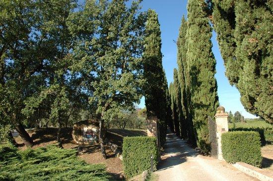 Agriturismo Borgo Santinovo: Zufahrt