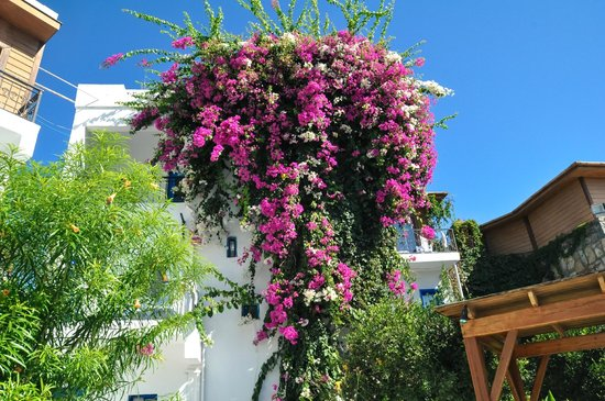 Blue Bodrum Beach Hotel: Отель