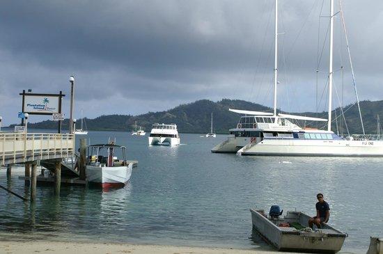 Plantation Island Resort : Lagoon