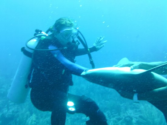 Scuba Sensations: Dive with the sharks