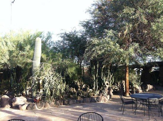 BeDillon`s Restaurant & Cactus Garden : Some of the cactus garden