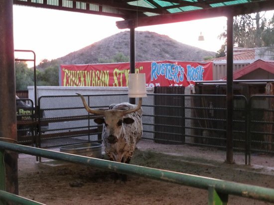Rustler's Rooste : This guy is staring at you as you walk in!