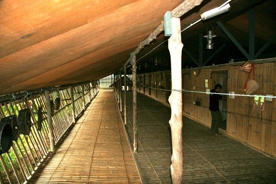 Sabah Tea Garden: Longhouse