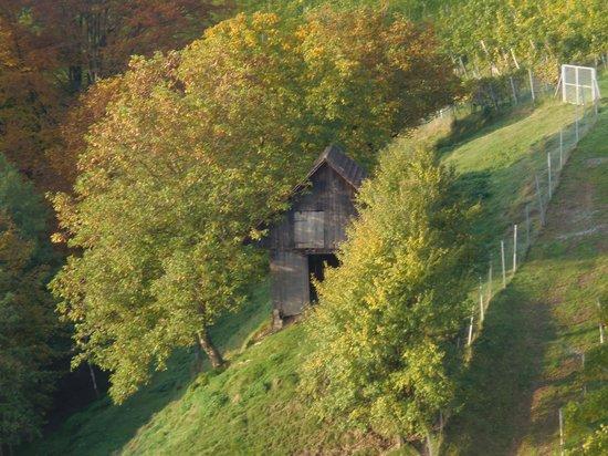 Weingasthof Sabathihof: in der näheren Umgebung