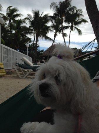Bayside Inn Key Largo: Hamaca