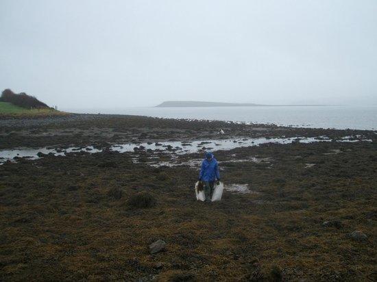 Soak Seaweed Baths: More wet seaweeding