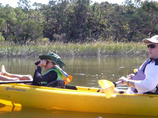 Kayak Amelia: Wildlife sightings - we saw a sea turtle and two bald eagles