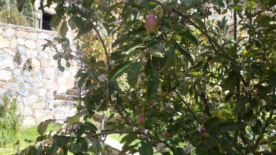 Refugio Romano: Vista de los Manzanos desde la Habitacion Gris