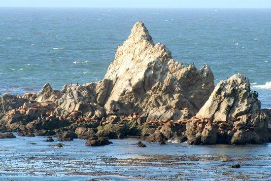 Cape Arago Lighthouse: Oregon Islands NWR
