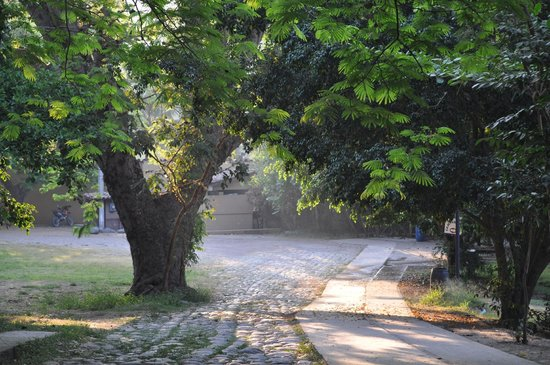 Carrizal Spa: Arbol Abuelo