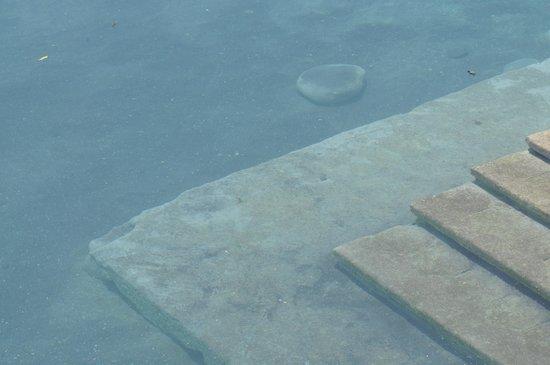 Carrizal Spa: La Poza de Aguas Termales / Hot Water Springs