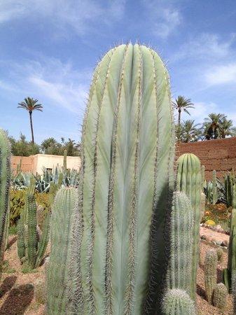 Musee de la Palmeraie : Jardin de cactus