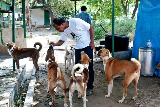 The doggy brigade at the elephant rescue facility - playful