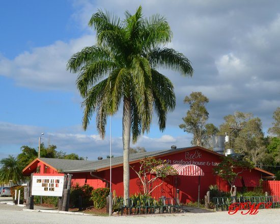 Red's Fresh Seafood House & Tavern: Red's as seen from the parking lot.  Great palm tree!