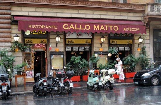 Gallo Malto