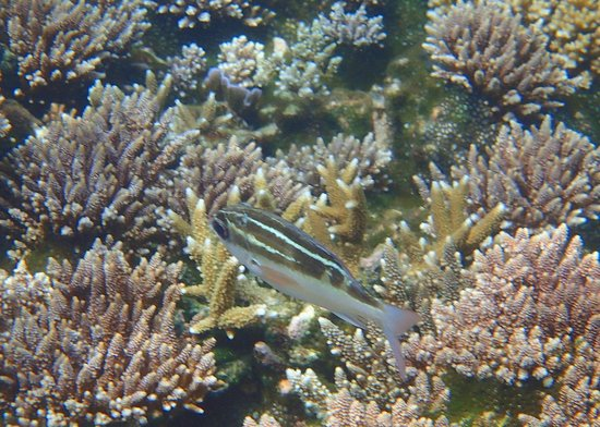 Redang Island: More reef fishes