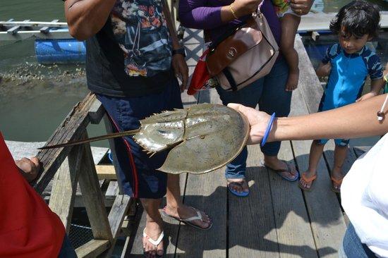 Century Helang Hotel: Boat trip -Tanjung Rhu