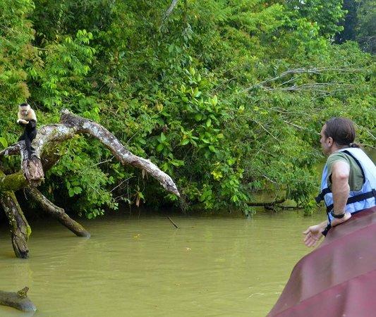 Monkey Lodge Panama: Fabrice feeding wild monkeys