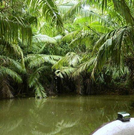 Monkey Lodge Panama: Boat tour up a tributary