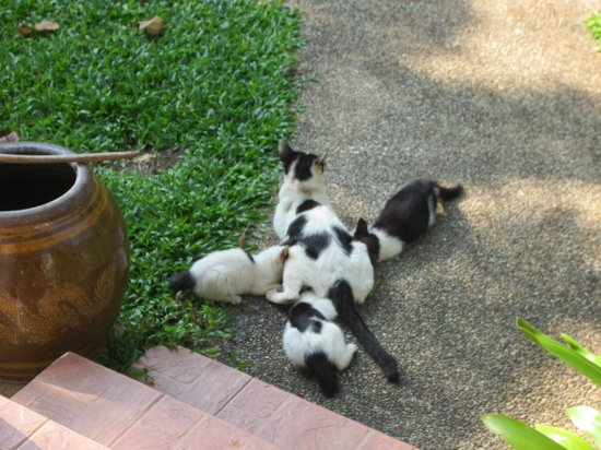 Baan Chaba Bungalows : Kittens :)