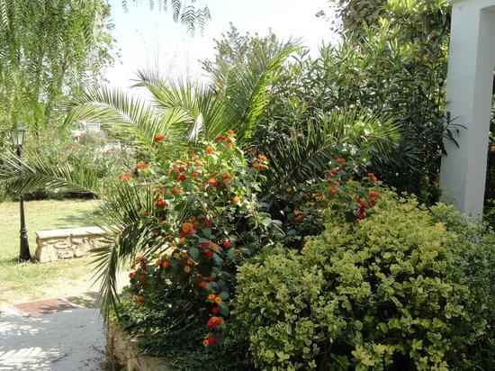 RV CAN TORRENTS: растительность