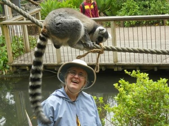 Auckland Zoo: Making friends with lemurs