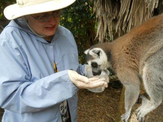 Auckland Zoo: Even feeding them!