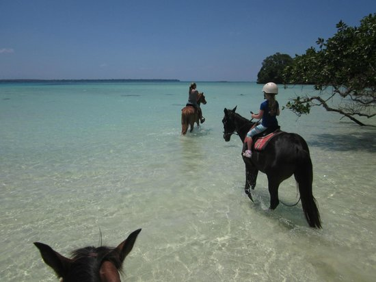 Lope Lope Lodge: horseriding in front of our bungalows